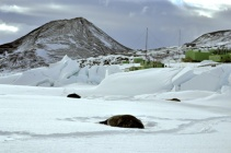 Weddell Seals with Observation Hill and Scott Base in background (Nov 2011)